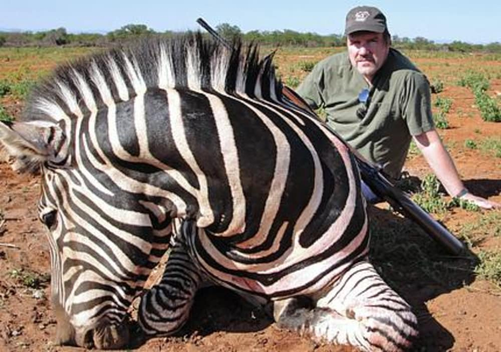 bagging a zebra on the african plains outdoorhub. Black Bedroom Furniture Sets. Home Design Ideas