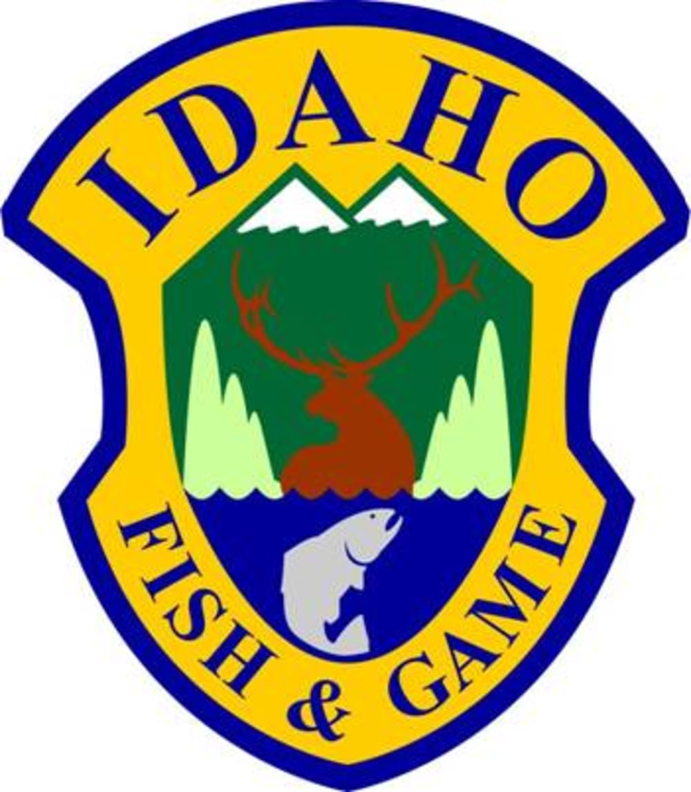 Applying for spring black bear controlled hunts in idaho for Idaho fish and game