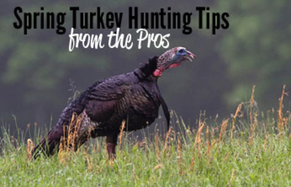 Turkey Calling: Late Season Tips That Work - YouTube