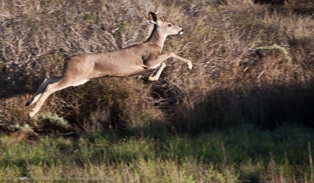 California Deer Association Nets $135,000 for California Big