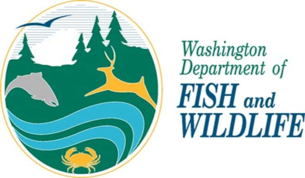 Thousands of jumbo trout planted in lakes in washington for Wash state fishing reports