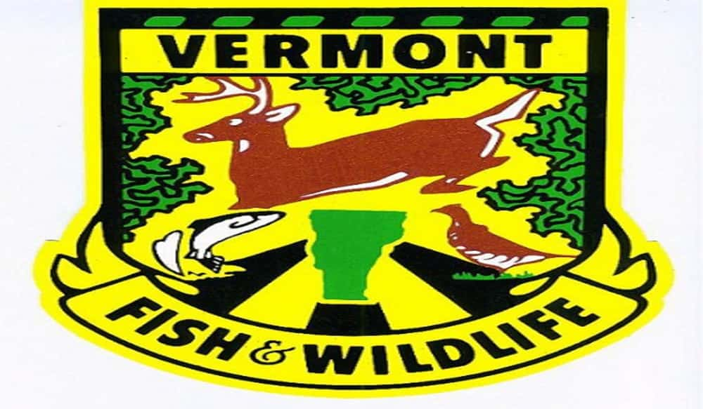 Vermont fish wildlife department embarks on new bear for Vermont fish and wildlife
