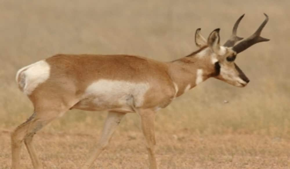 Application deadline for arizona 39 s elk and pronghorn hunts for Az game and fish draw results 2017