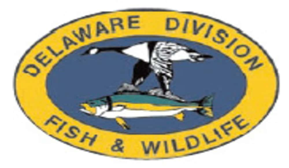 Delaware To Host Workshop For Nuisance Wildlife Control