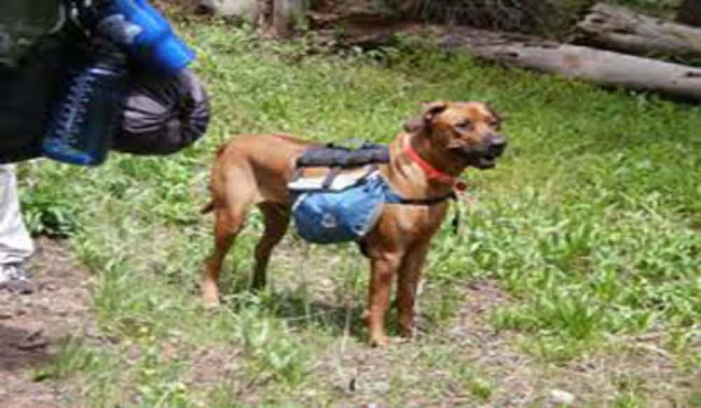 Can You Take Dogs To National Parks