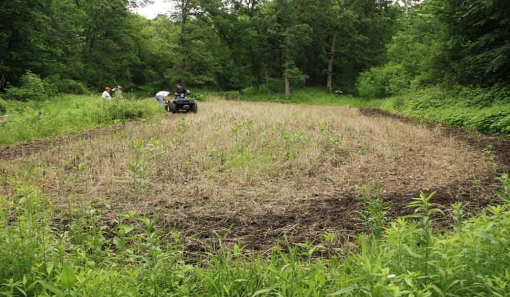 Low Ph Soil Food Plots