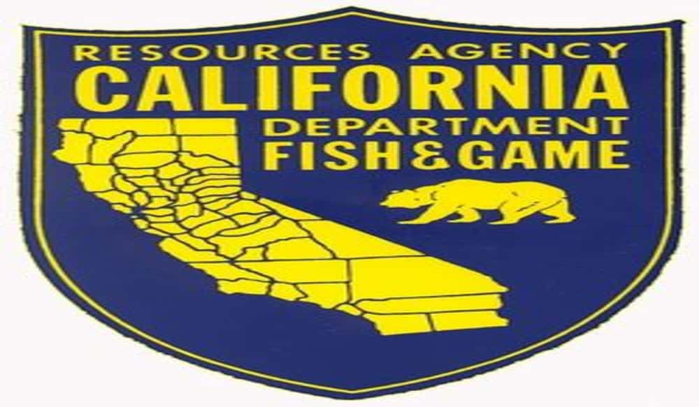 California woman sustains minor injuries from bear attack for Ca dept of fish and wildlife