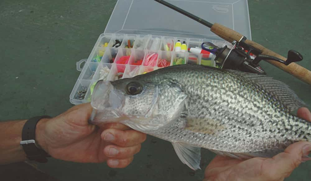 Minimum 10 inch size limit in effect for black crappie in for Florida fish size limits
