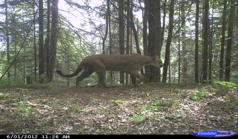 Cougar dating in michigan