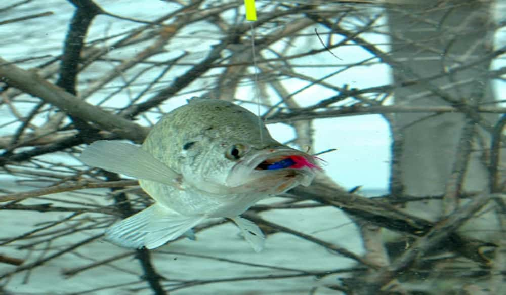 Hot summer crappie fishing tips outdoorhub for Crappie fishing secrets