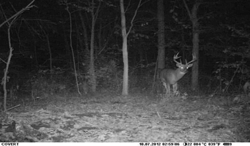 Covert Scouting Cameras' Special Ops