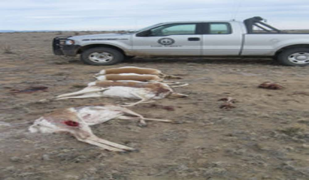 New mexico game and fish arrests suspected poacher who for Nm game and fish