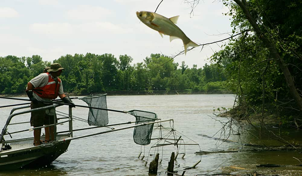 The Asian Carp Invasion of the Great Lakes