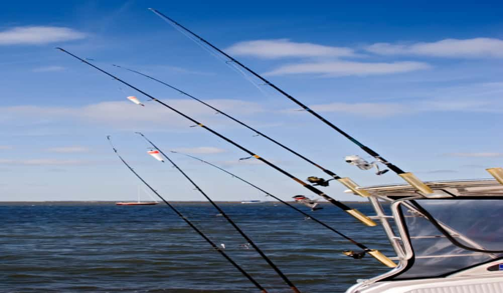 Image result for Fishing Charter istock