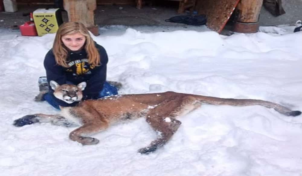 Eleven Year Old Girl Shoots Mountain Lion Stalking Her Brother