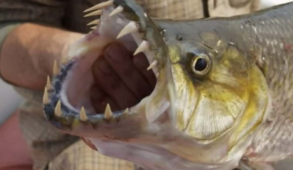 The 7 Most Dangerous Fish For Anglers Outdoorhub