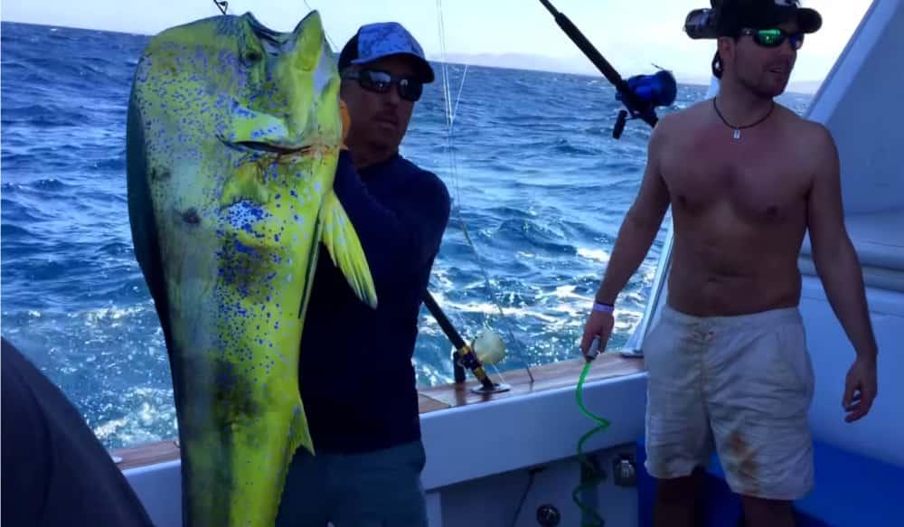 "Record Dorado ""Filleted Fish Ca..."