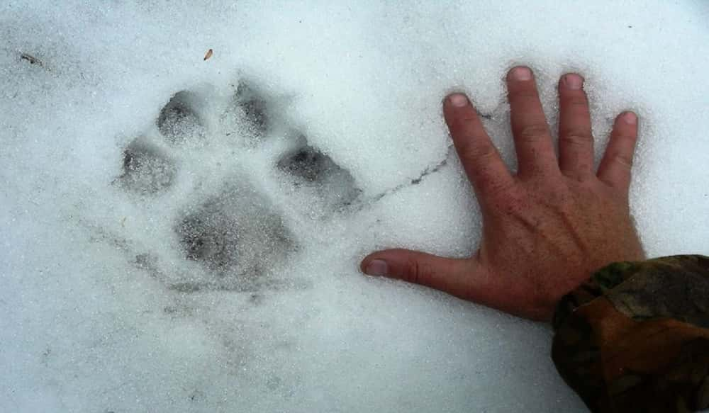 Quiz: Can You Correctly Identify These 15 Animal Tracks? | OutdoorHub