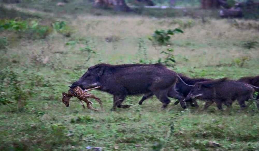Wild Boar Meat Company Dog Food
