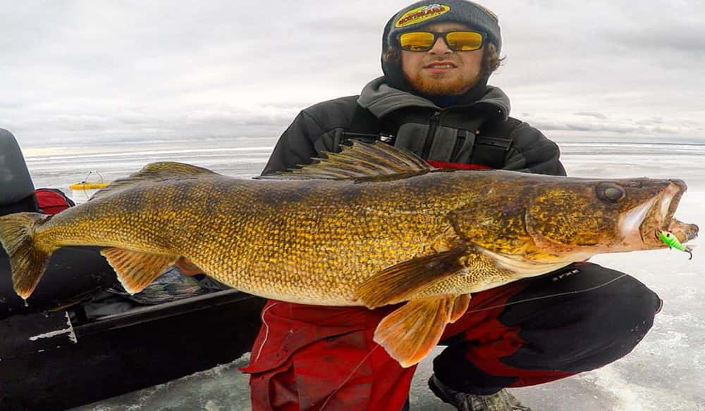 Targeting late ice walleyes outdoorhub for Best time to fish for walleye
