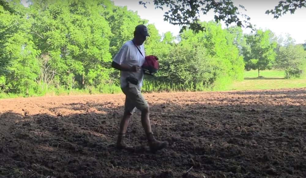 Video Why Beets Amp Greens Should Be On Your Food Plot