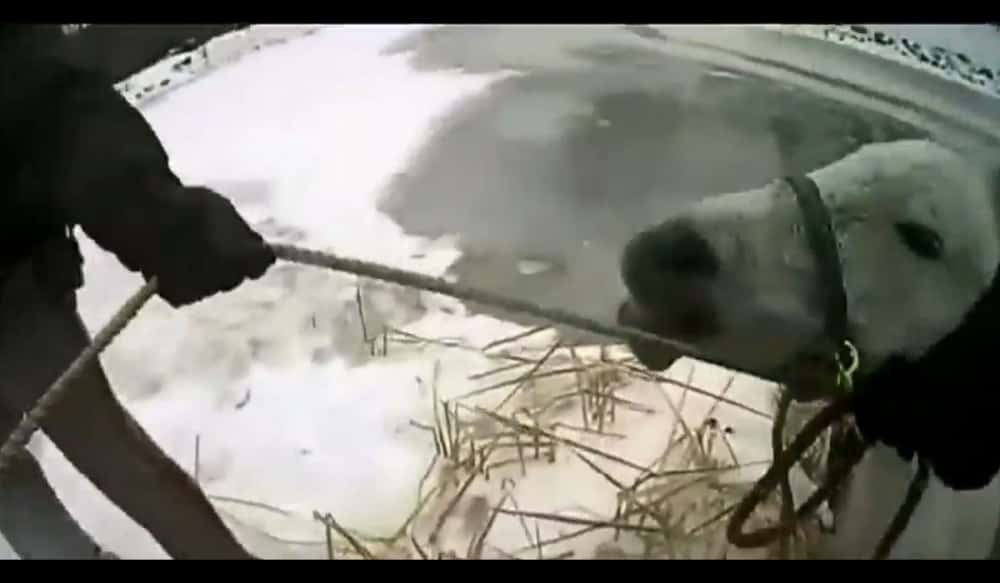 Watch Police Rescue A Horse Trapped In A Frozen Pond