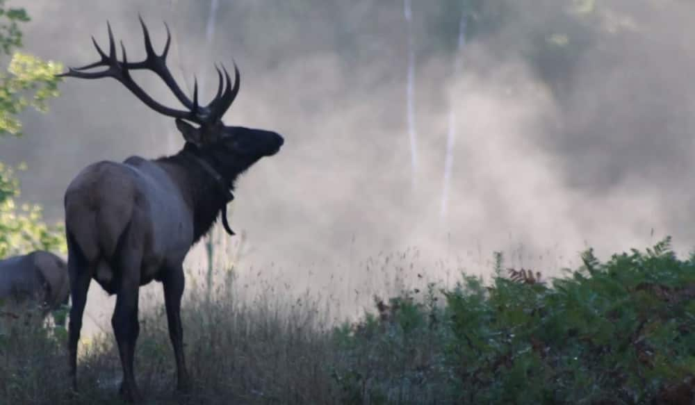 Hunters Can Now Apply For Wisconsin's 2018 Inaugural Elk