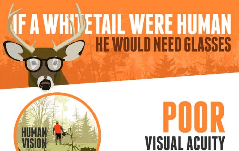 INFOGRAPHIC: Deer Vision – How to Fool a Whitetail's Eyes