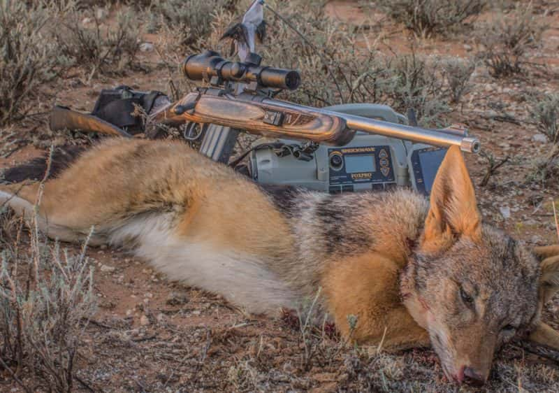 how to call coyotes with foxpro