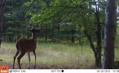 Here's Your 2019 Deer Season Outlook | OutdoorHub